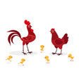 red chicken family isolated on white background vector image vector image
