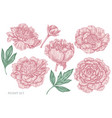set hand drawn pastel peony vector image