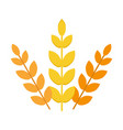 ears of wheat agriculture food natural vector image