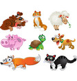 bis set funny pig dogs cats sheep tortoise and vector image