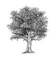 hand drawing drawn tree vector image vector image