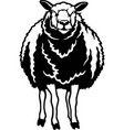 peeking sheep - funny farm animals out vector image vector image