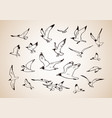 sketch flying seagulls set silhouettes of vector image