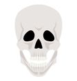 Skull isolated on white vector image
