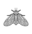 clothing moth sketch vector image