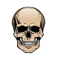 Colored human skull with jaw vector image vector image