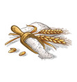 colorfull wooden scoop of fresh ears of wheat vector image vector image