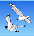 two cartoon seagulls on a blue background sketch vector image vector image