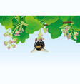 bumblebee on a flower and currant leaves vector image vector image