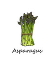 green asparagus on a white background vector image vector image