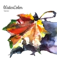 hand painting watercolor autumn leaf vector image vector image