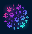 paw prints round bright and colored vector image