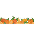 autumn hand-drawn border with pumpkins gourds vector image