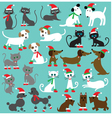 christmas cats and dogs vector image vector image