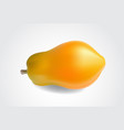 ripe papaya isolated on a white background vector image vector image