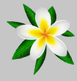 large magnolia flower on a background of green vector image vector image