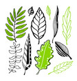 leaves collection for design decoration vector image vector image