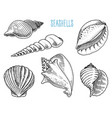 seashells or mollusca different forms sea vector image