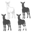 set of black and white images with okapi vector image