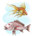 watercolor sketch fish set vector image