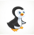 cute baby penguin isolated on white background vector image vector image