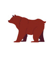 grizzly and brown bear in a flat cartoon style vector image