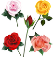 Rose collection vector image vector image