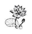 Water lily flowers on pond black and white vector image vector image