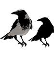 Black Crows vector image