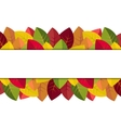 Autumn leaves on a white background vector image vector image