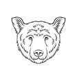 black and white sketch of bears head face of wild vector image