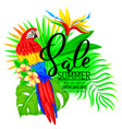 summer sale bright composition with parrot vector image vector image