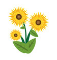 sunflower spring image icon vector image