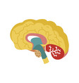 human brain isolated icon vector image vector image