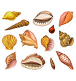 seashells or mollusca different forms sea vector image vector image