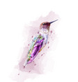tropic colorful bird watercolor isolated vector image vector image