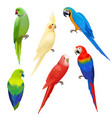 parrots realistic wildlife flight exotic colored vector image