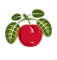 Red simple cherry with green leaves ripe sweet vector image vector image