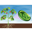 Chloroplast in plant vector image vector image