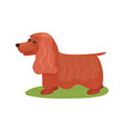 english cocker spaniel dog purebred pet animal vector image