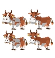 Four brown and spotted cows chewing grass vector image vector image