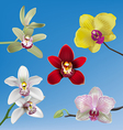 Orchid Collection vector image vector image