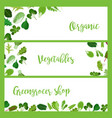 organic horizontal banners with salad leaves vector image vector image