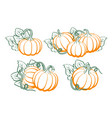 pumpkins with leaves silhouette on white vector image vector image