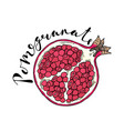 the cut fruit of pomegranate on a white background vector image vector image