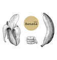 banana collection sets hand drawing vintage vector image vector image