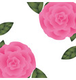 beautiful roses with leafs isolated icon vector image