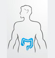 Intestines and human body vector image vector image