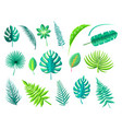 tropical foliage collection vector image vector image