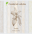 vanilla essential oil label aromatic plant vector image vector image